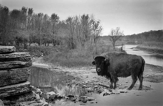 Randall Branham - Buff in the creek