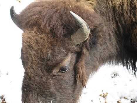 Buffallo Vision by Visual Renegade Art
