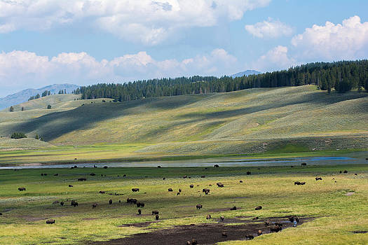 Randall Branham - Buffalo Herd