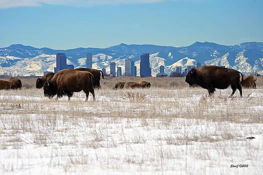Buffalo Invade Downtown Denver by Stephen  Johnson