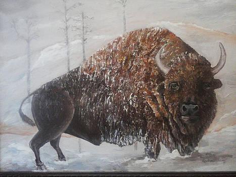 Buffalo Jess by Debora Callison