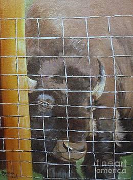 Buffalo or Bison  by Barbara Haviland