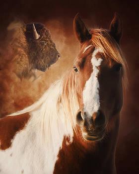 Buffalo Pony by Ron  McGinnis