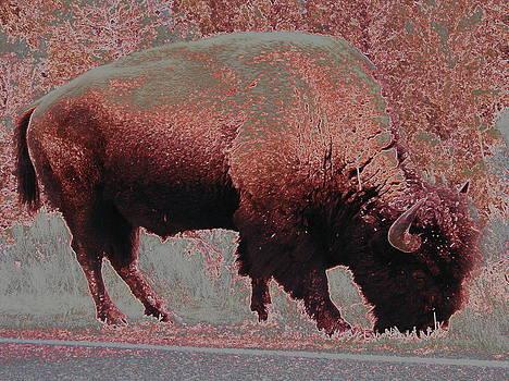 Buffalo Power by Johanna Elik