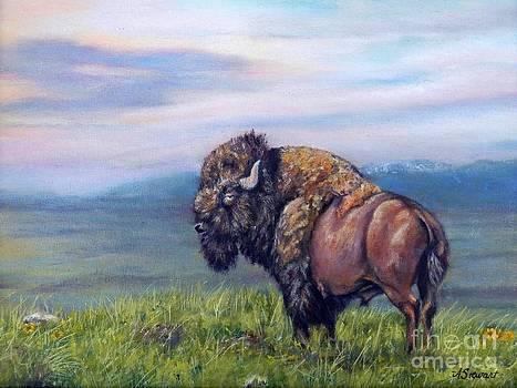 Buffalo Study by Amanda Hukill