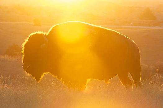 Buffalo Sunrise by Kevin Bone