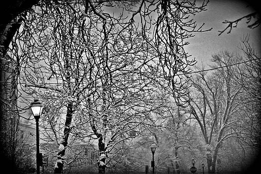 Buffalo Winter by Stephanie Leidolph