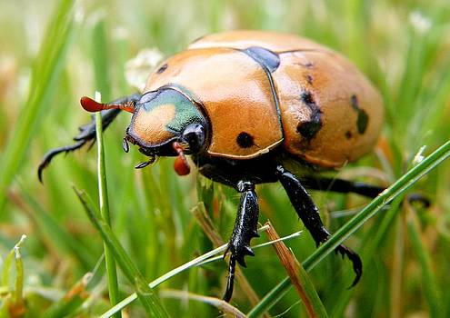 Bug in Grass by Amanda Struz