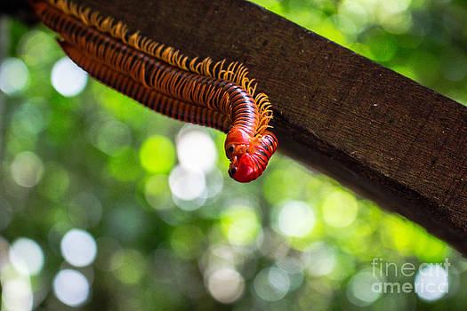 Bug Love by Will Cardoso