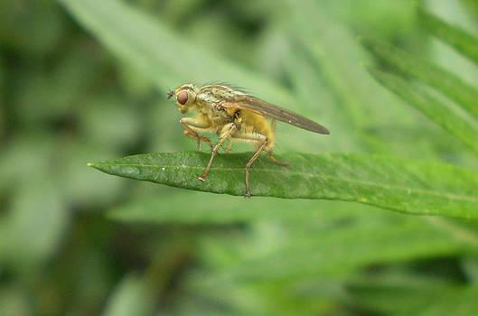 Bug On A Leaf One by Fabian Cardon