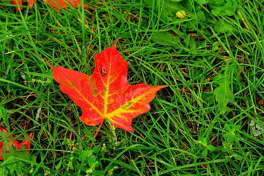 Bug on fall leaf by Shaivi Divatia