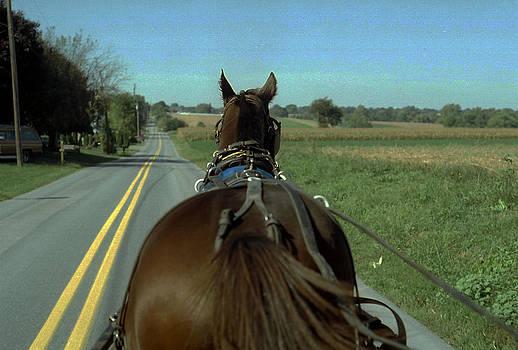 Buggy Ride  by Joyce  Wasser
