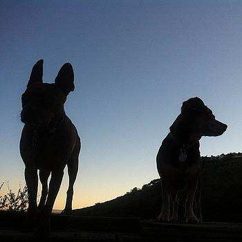 Bugsy And Sadie Hiking The Hollywood by Richard Reens