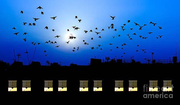 Simon Bratt Photography LRPS - Building windows asleep with birds
