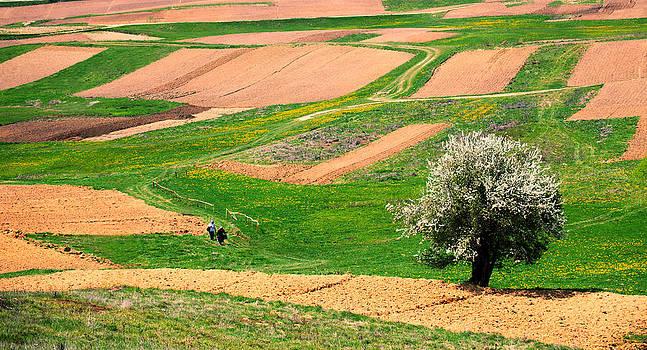 Bulgarian farmland  by Svetoslav Sokolov