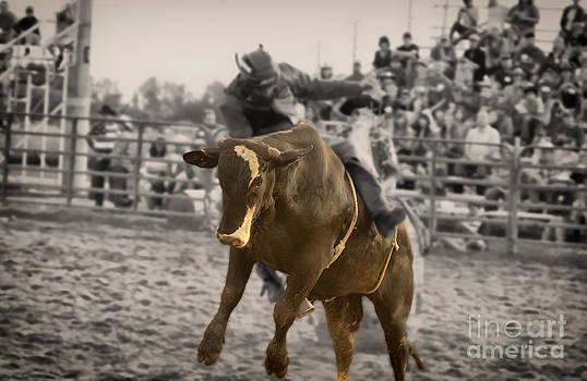 Bull 1 - Rider 0 by Timothy J Berndt