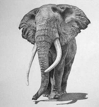 Bull Elephant by Mike OConnell