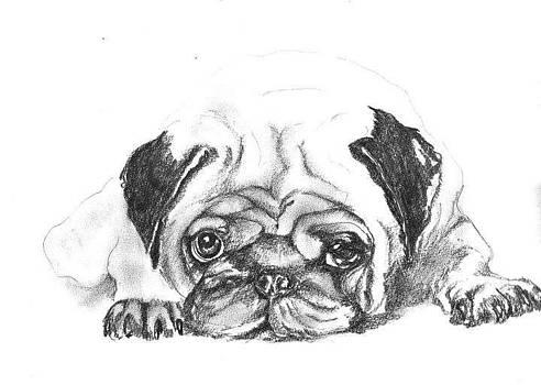 Bulldog by Aida Novosel Savic