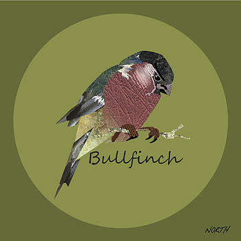 Bullfinch by Kenneth North