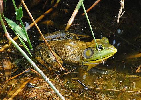 Bullfrog by Leah Reynolds