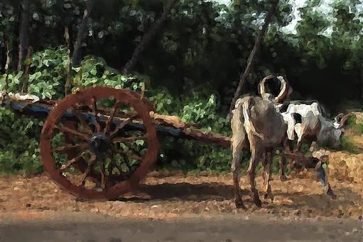 Bullocks in the Farm by Shreeharsha Kulkarni