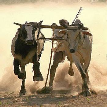 Bullocks race by Shreeharsha Kulkarni