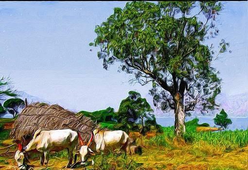 Bullocks by Shreeharsha Kulkarni