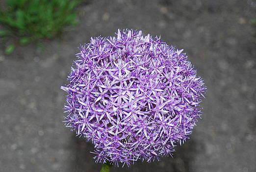 Bulb fl by William  James