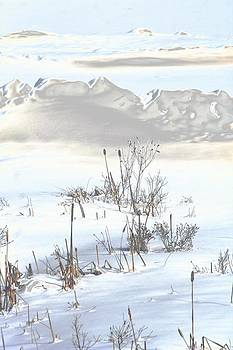 Bulrushes in Snow by Carolyn Reinhart