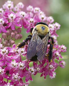 Bumble Bee by Julie Underwood