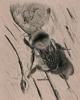 Bumble Bee by Michael Beckett