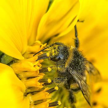 Thomas Schreiter - bumble-bee