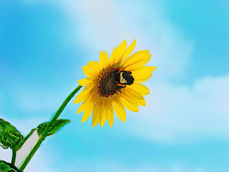 Bumblebee on my Sunflower by Mamie Thornbrue