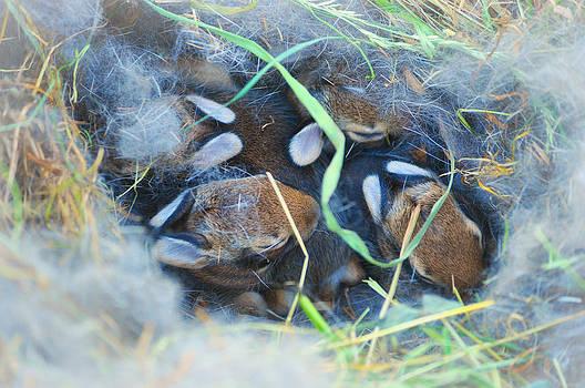 Mary Frances - Bunny Nest