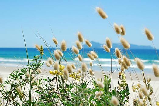 Bunnytails sea grass by Jocelyn Friis