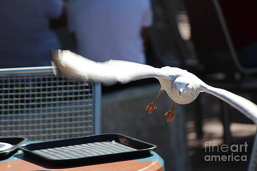 Burglar Seagull by Felipe Magalhaes