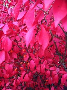 Burning Bush by Suzanne Stratton