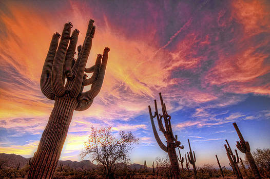 Burning Sky and Cacti by Ryan Seek