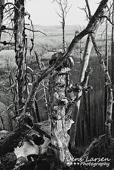 Burnt At Yellowstone by Jens Larsen