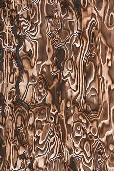 Burnt Tree Bark by Craig Brown