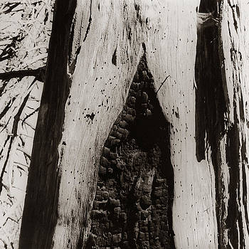 Burnt Trunk by Susan Smith Evans