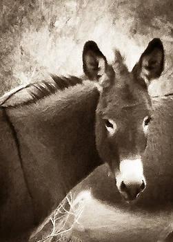 Burro in Repose  by  Garwerks  Photography