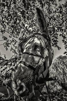 Burro na Sombra by Jonathan Wilkins
