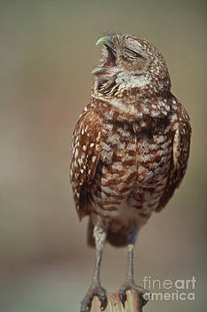 Connie Bransilver - Burrowing Owl