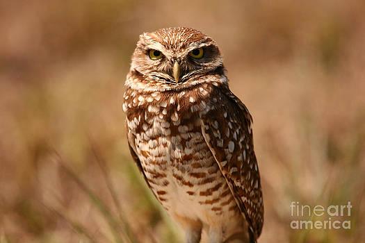 John F Tsumas - BURROWING OWL IMPRESSIONS