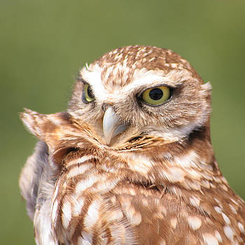 Burrowing Owl in the Wind by Bob and Jan Shriner