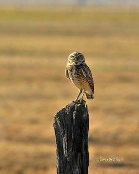 Karen Slagle - Burrowing Owl