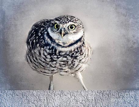 Ludmila Nayvelt - Burrowing Owl