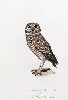 Michael Earney - Burrowing Owl