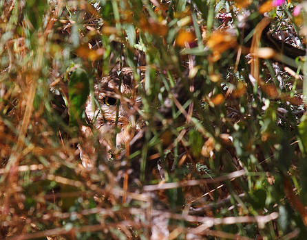 Burrowing Owl Spying On Me. by Old Pueblo Photography